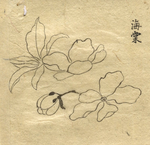 Cherry Blossom Flowers - Original 19th-century pen & ink drawing