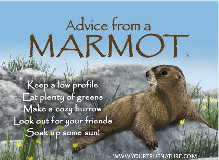 Advice from a Marmot Jumbo Magnet