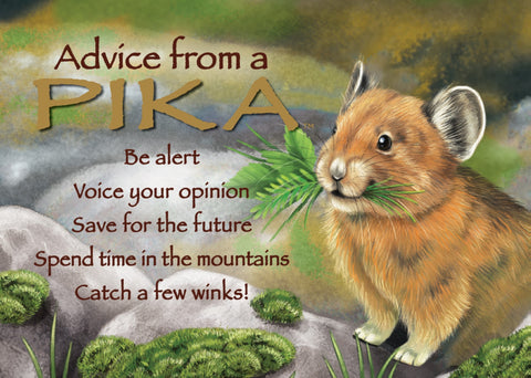 Advice from a Pika Jumbo Magnet