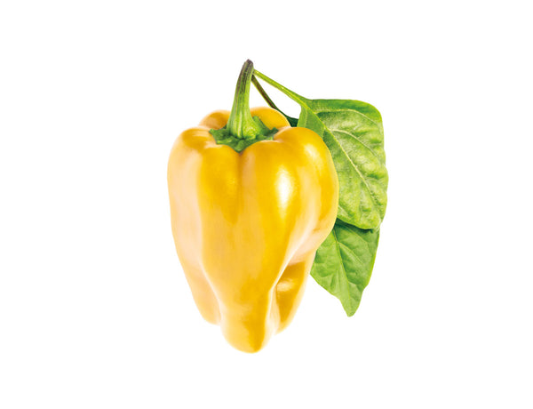 Yellow Sweet Pepper Plant Pods