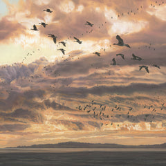 Wildfowl Picture of Geese in Flight at Sunset. Pink-footed Geese Print