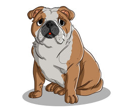 English Bulldogs 101: Everything You Need To Know About Your Newest Family Member | Innovet Pet