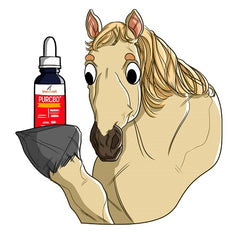 Facts & Benefits of CBD Oil for Horses