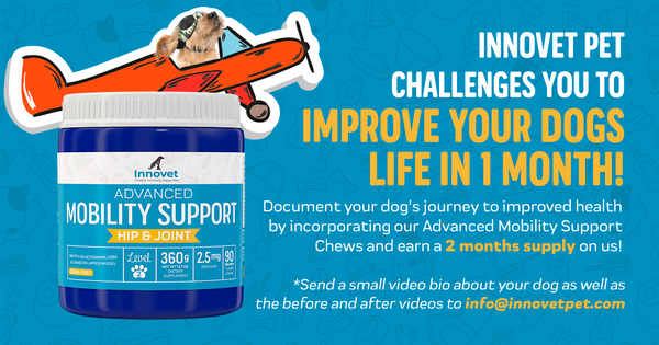 Innovet Pet Products 1 Month Challenge
