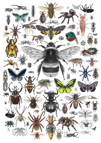 87 Invertebrates - A4 size limited edition archival print