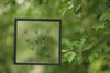 Entomology Insect Art | Beetle Collection Taxidermy Frame - F006 - Natural History Direct Online Shop - 2
