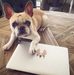 Honey Pied / French Bulldog Mini Sticker - French Bulldog Love - 2