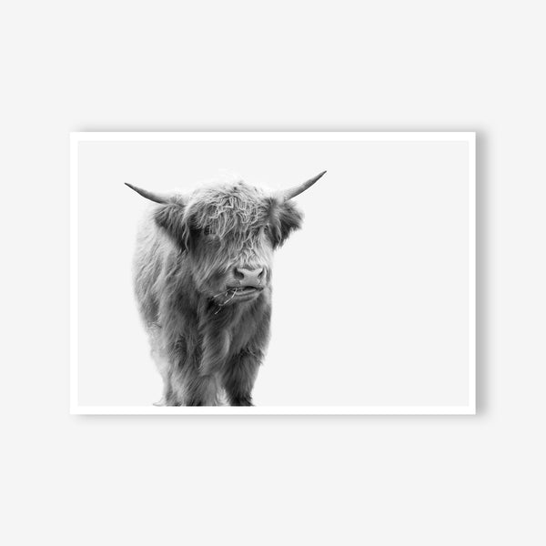Highland Cow animal wall art print black and white animal photography