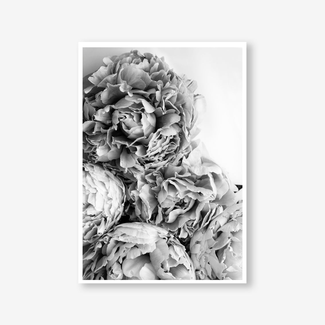 Peonies floral wall art print black and white botanical photography