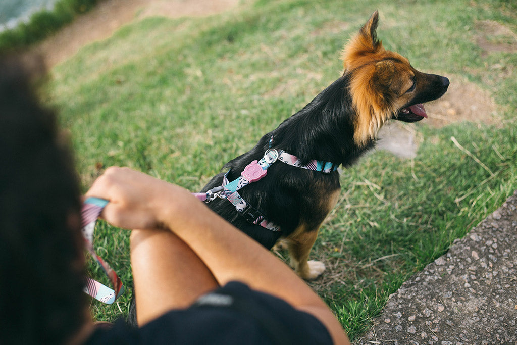 Memphis | Dog H Harness