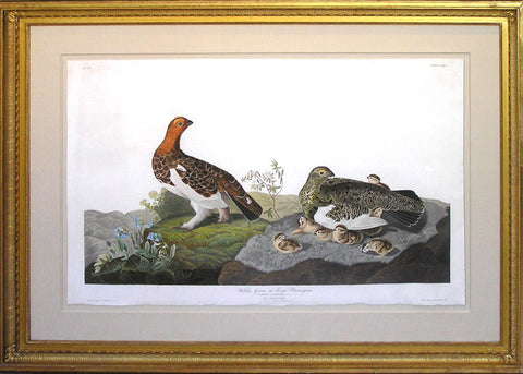 Plate 191 Willow Grouse