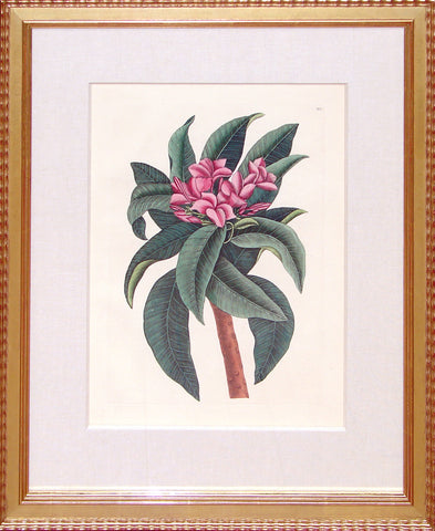 Framed-Red Frangipani
