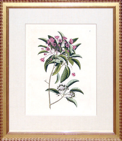 Framed-Mountain Laurel