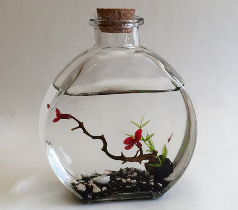 Glass flask with coral ,red pua, and two opae'ula