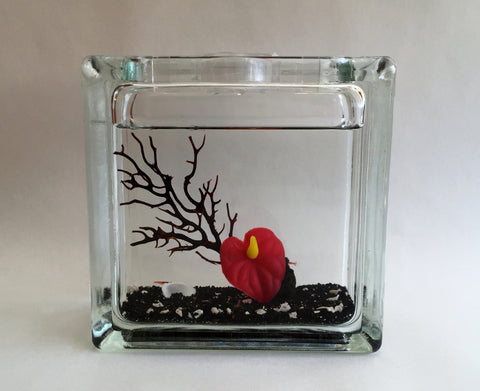 Medium Glass Block w 6 Hawaiian Red Opae'ula