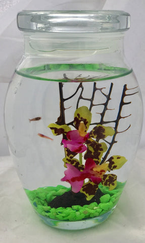 "5"" Glass with coral, yellow orchids, and four opae'ula"
