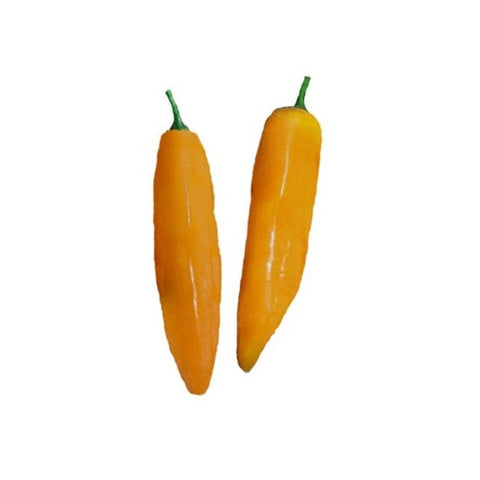 Datil Pepper Seeds