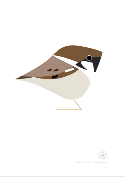 Tree Sparrow. Studio Birds | series 2.