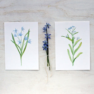 Blue botanical watercolor prints - Scilla and Forget-me-nots by artist Kathleen Maunder