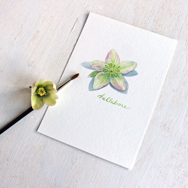 An art print featuring a botanical watercolor painting of a hellebore flower by Kathleen Maunder
