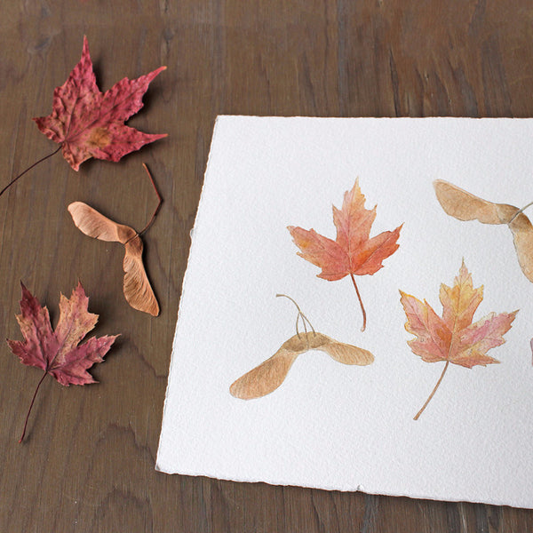 Detail of autumn watercolor of maple leaves and keys by Kathleen Maunder