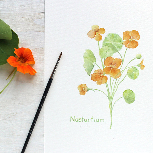 Nasturtium Watercolour Print by artist Kathleen Maunder of Trowel and Paintbrush