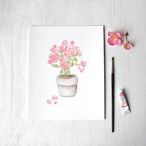 Pink begonia plant in a pot by watercolor artist Kathleen Maunder - Available as a print.