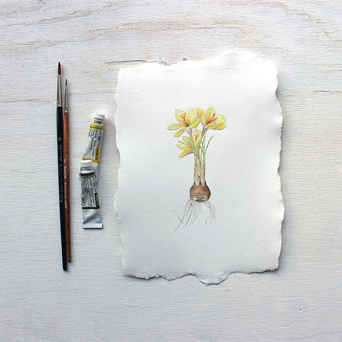 Botanical watercolor painting of yellow crocus by Kathleen Maunder