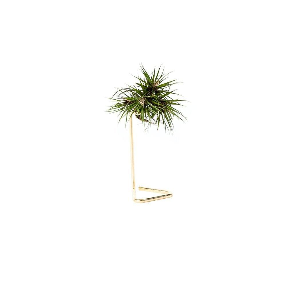 Copper & Gold Air Plant Stand - touchGOODS