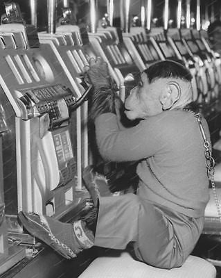 Monkey Plays Slot Machine Vintage 8x10 Reprint Of Old Photo