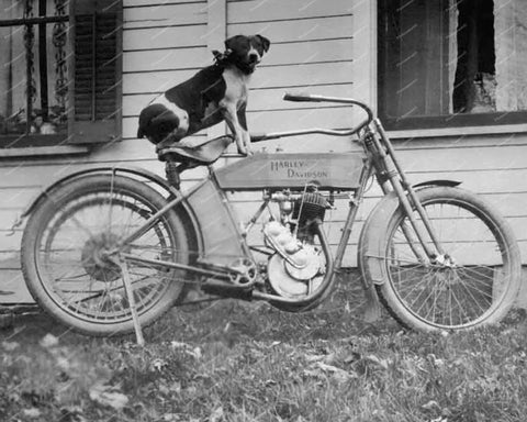 Dog Sitting On A Harley Davidson Motorcycle Vintage 8x10 Reprint Of Old Photo