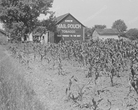Barn Sign Chew Mail Pouch Tobacco1938 Vintage 8x10 Reprint Of Old Photo