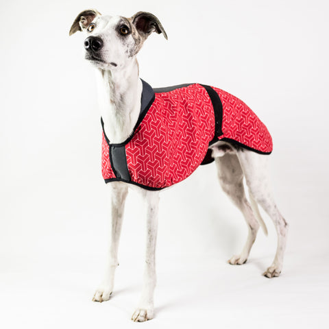 Print Limited Edition Dog Coat