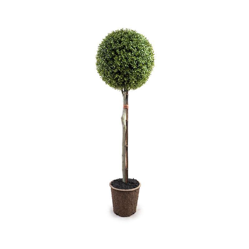 "15"" Boxwood Ball Topiary - New Growth Designs"