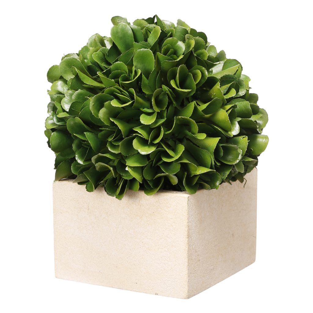 BOXWOOD GREENARY