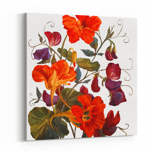 Nasturtium And Sweet Peas  Flowers, Isolated On White Background Botanical Illustration Watercolor Painting Canvas Wall Art Print