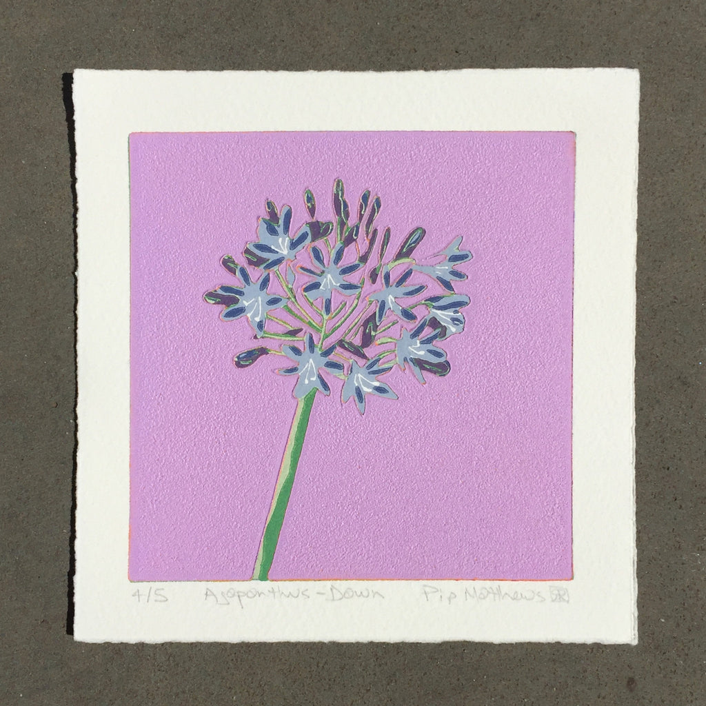 Limited Edition Print Signed Reduction Linocut Agapanthus - Dawn