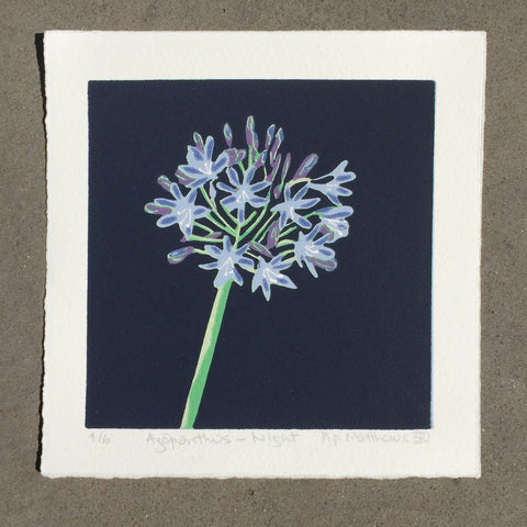 Agapanthus - Night