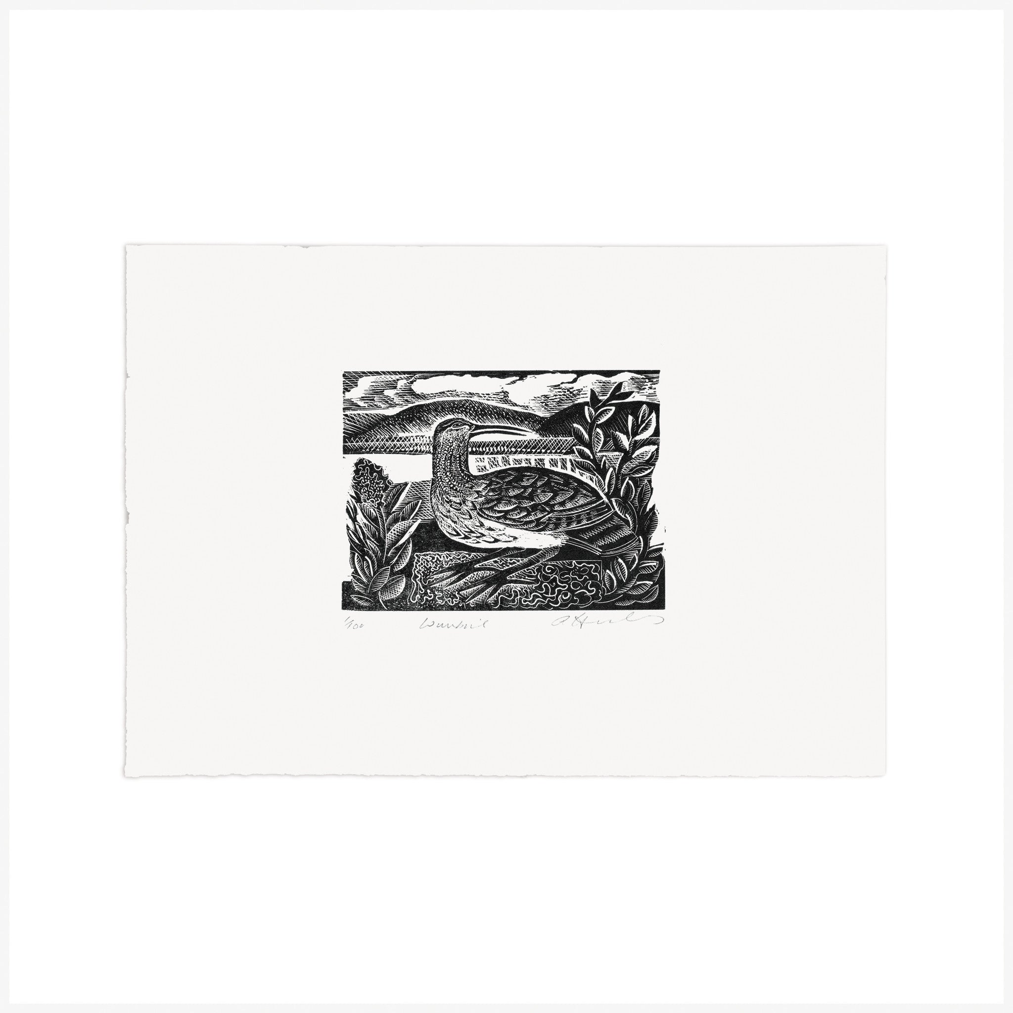 W is for Whimbrel, Wood Engraving by Angela Harding