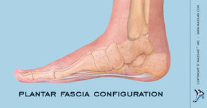Configuration of the Plantar Fascia
