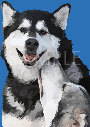 Alaskan Malamutes on Blue Greeting Card (Maya and Sweet Pete)