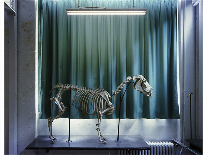 Richard Barnes - Left Panel, Horse, Musee Fragonard - available in 3 sizes, Chromogenic Print Mounted to Archival Substrate, Framed in White with Plexiglass,  - Bau-Xi Gallery
