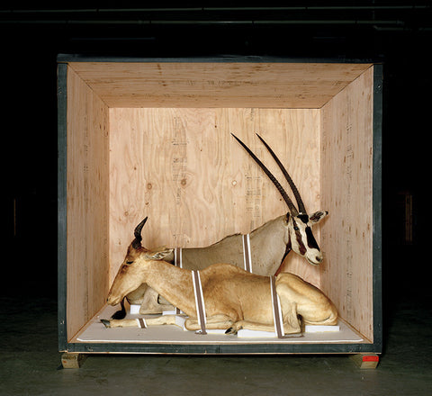 Smithsonian Antelope from Animal Logic - available in 3 sizes