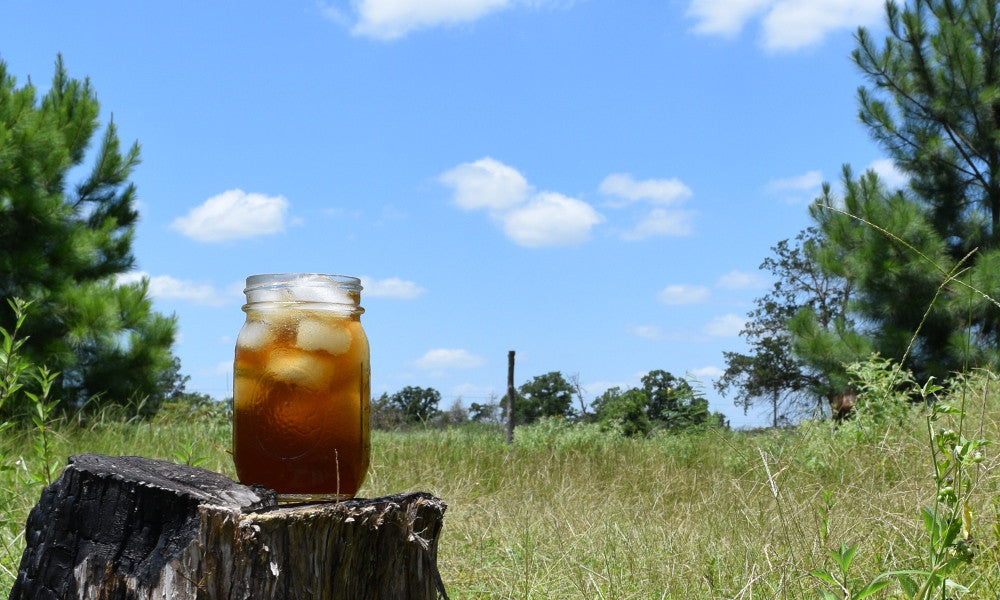 Yaupon iced tea sitting out in the Lost Pines forest