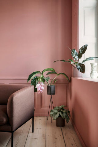 pink wall with pot plants