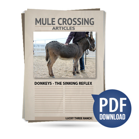Donkeys - The Sinking Reflex
