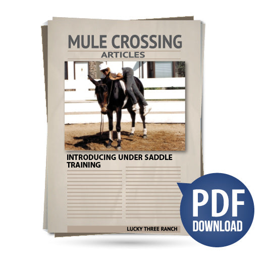 Introducing Under Saddle Training