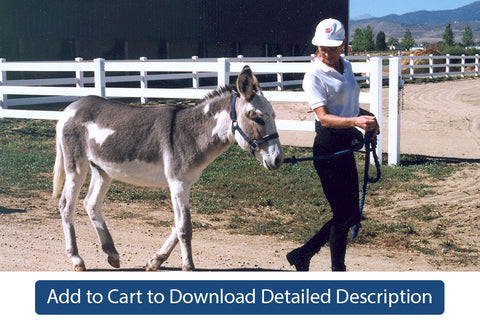 Training Tip - #001 Training Donkeys