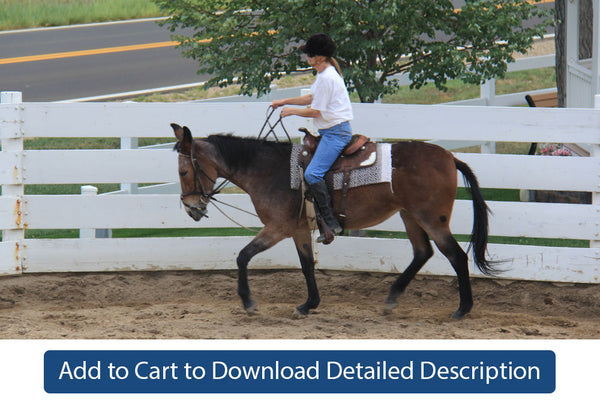 Training Tip - #072 Riding Round in the Pen Without an Assistant