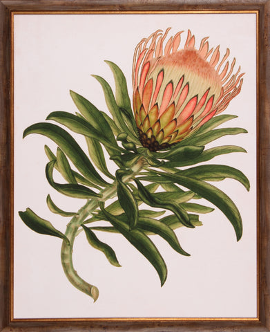 ANTIQUE PROTEA IV